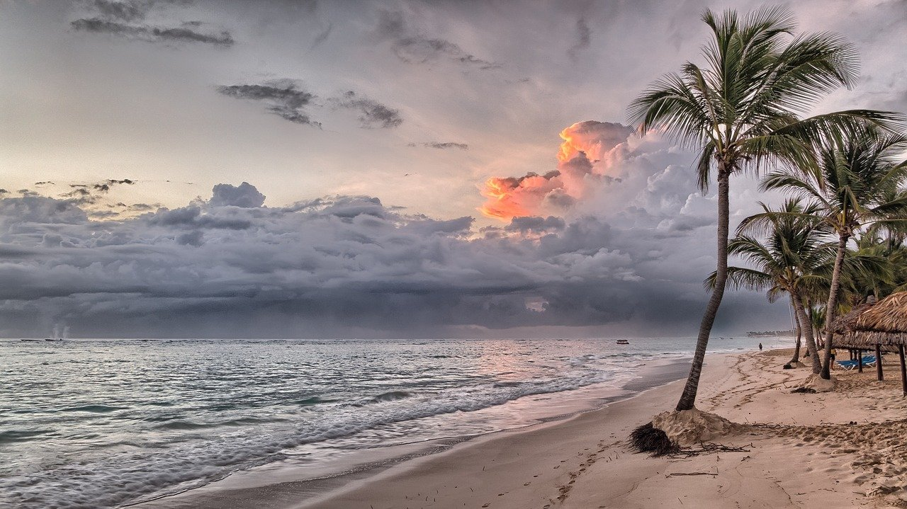 A group of palm trees on a beach